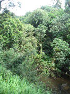 2010 décembre Sud Brésil