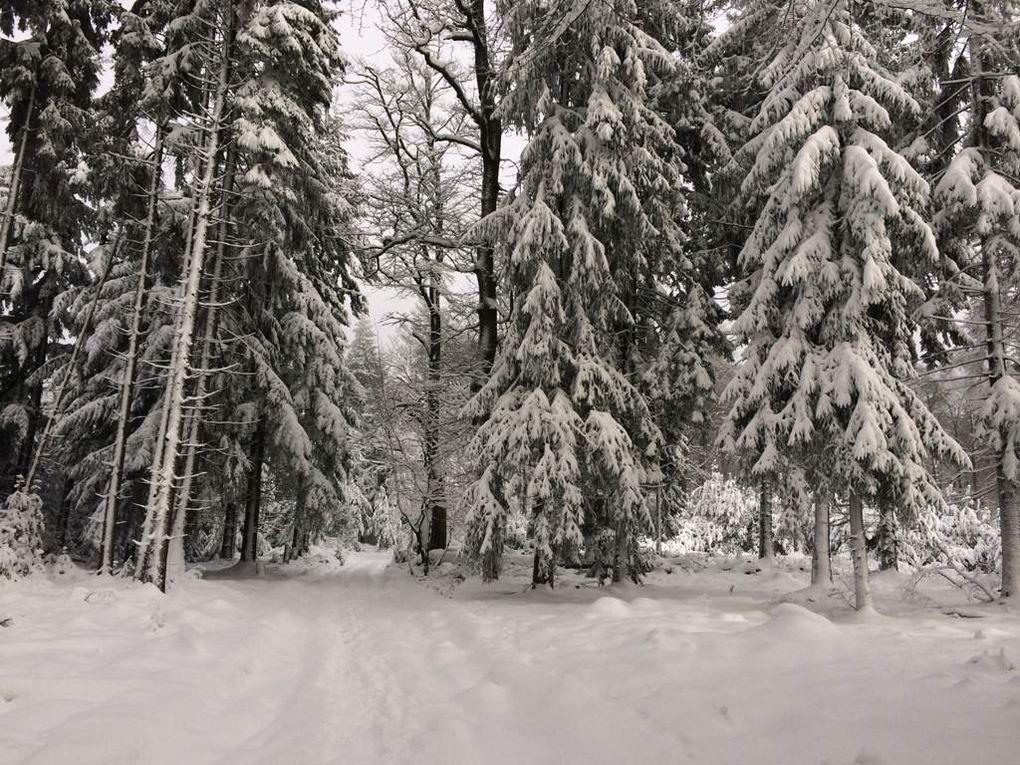 Un magnifique tapis blanc