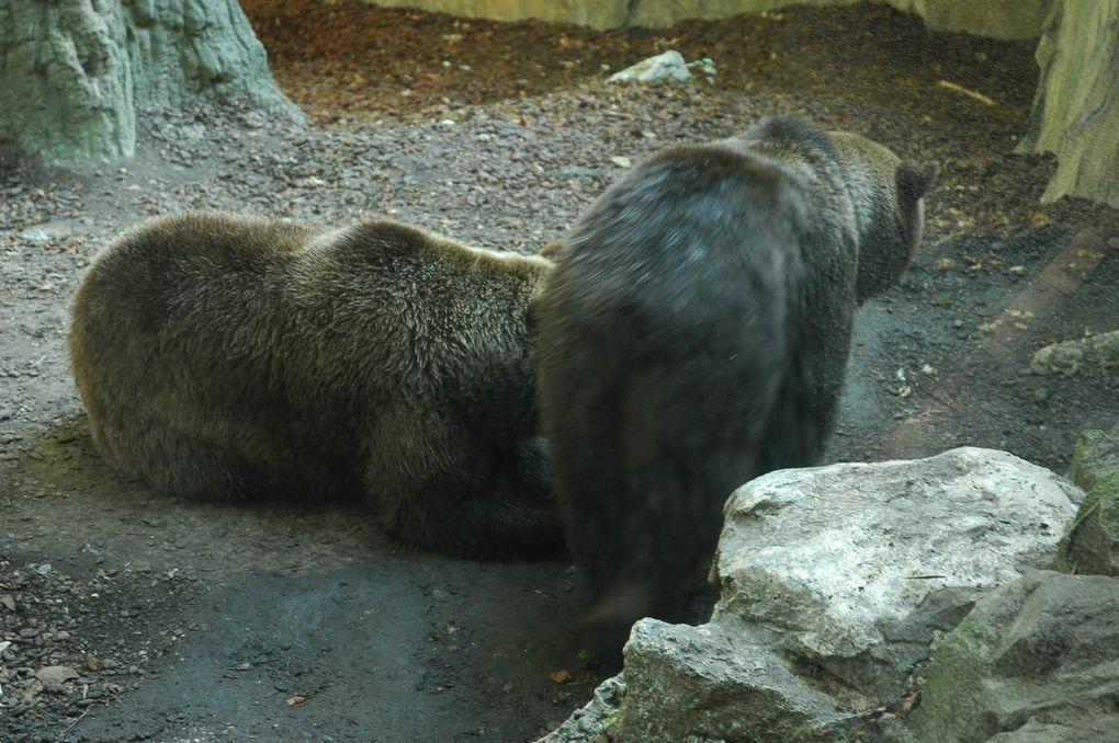 Album photos zoo de Beauval