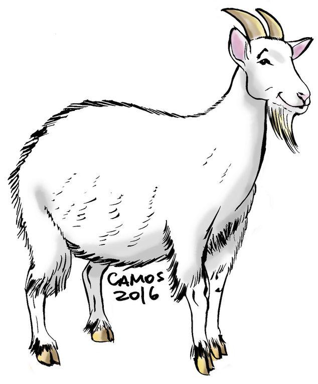 Dibujos por: César Angelo / Camos / imprentapublicamos@gmail.com