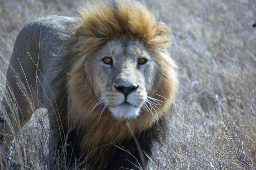 Fotos en Masai Mara, Serengueti y reserva de Ngorongoro (Tanzania). Montse Colilles y Jordi Prat