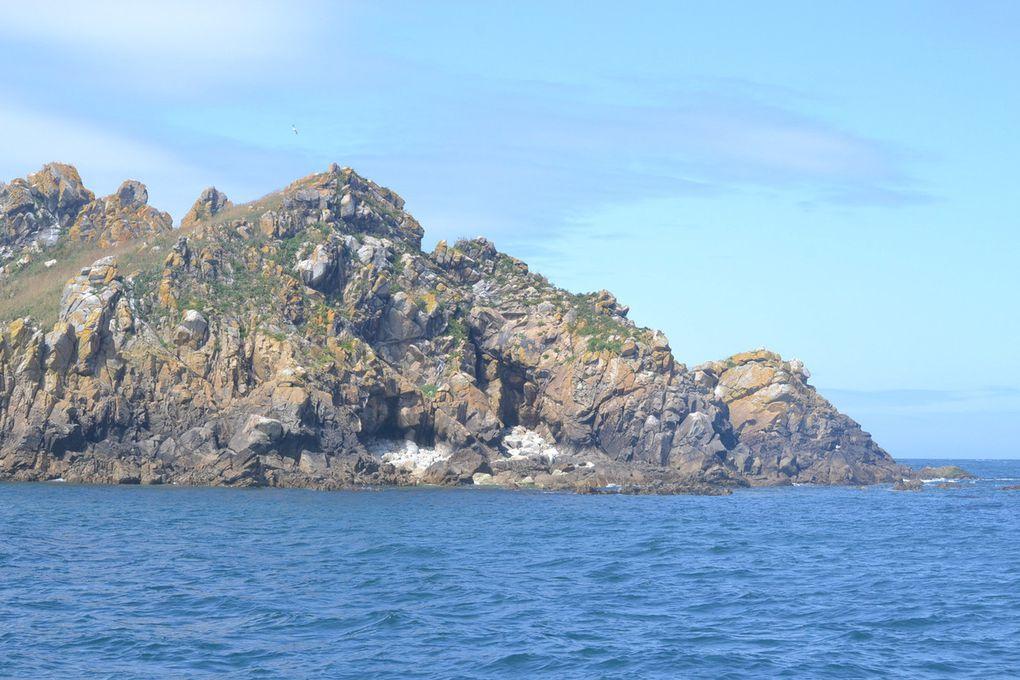 les photos sont très difficiles à faire, le bateau reste suffisamment éloigné pour ne pas gêner les oiseaux ...!