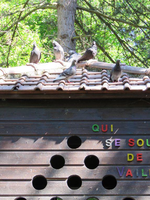 Première Journée Nature du Club Jeunes SPA
