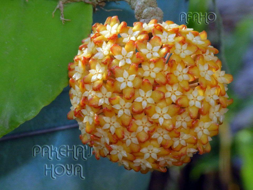 de jolie fleurs de collection