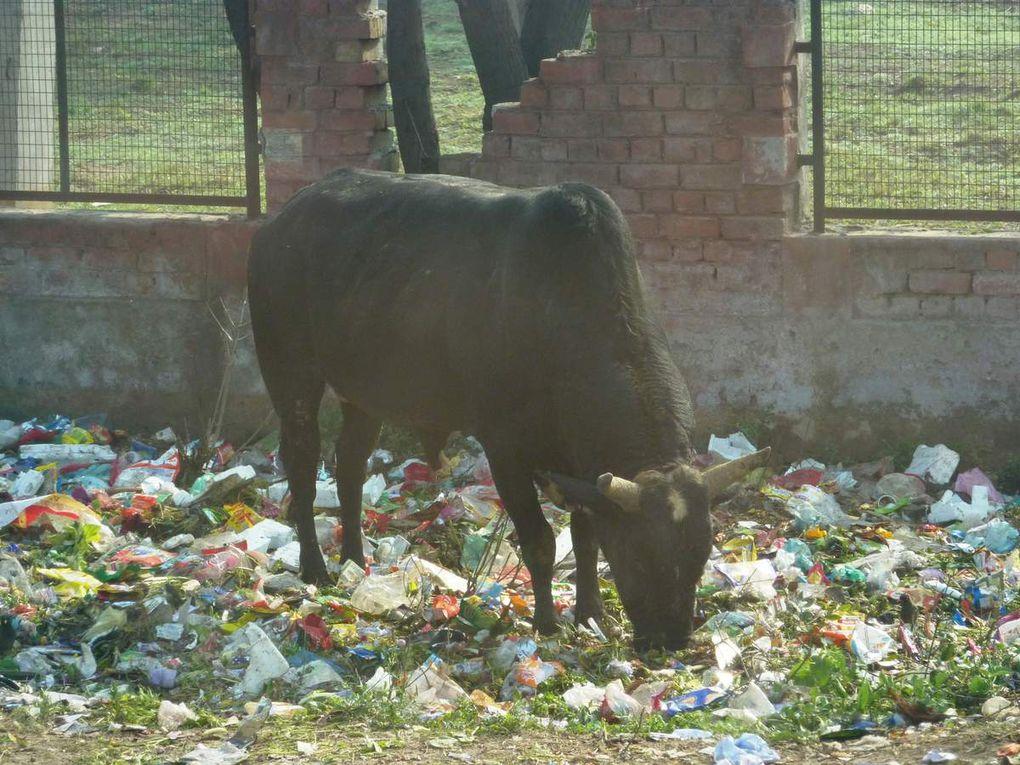 Album photos : Inde du nord 2011