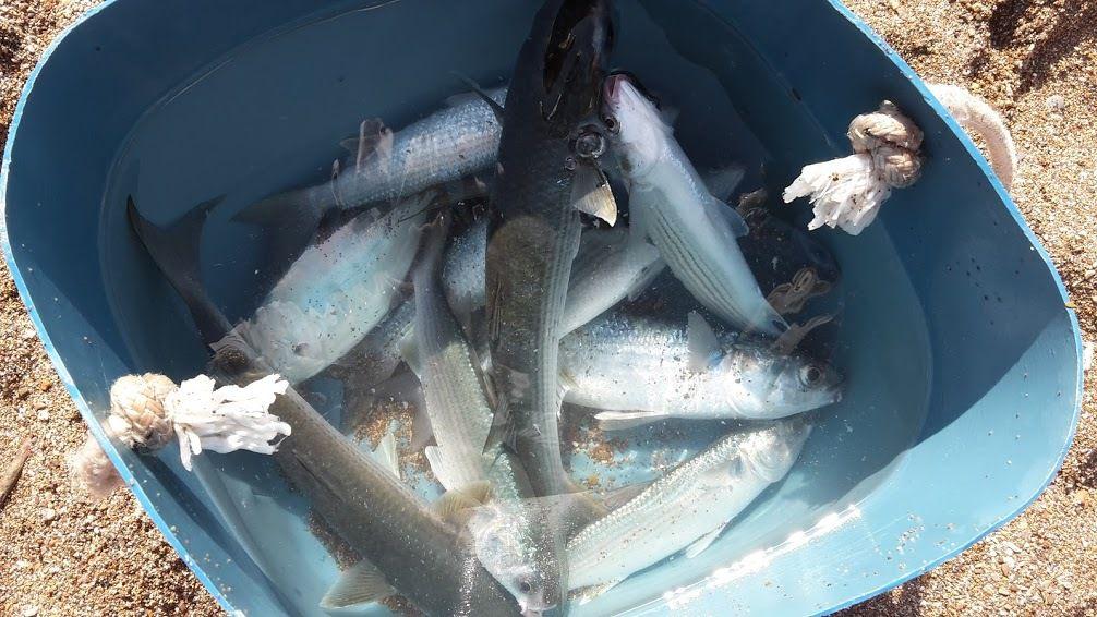 Humour Alsacien: Journée de pêche