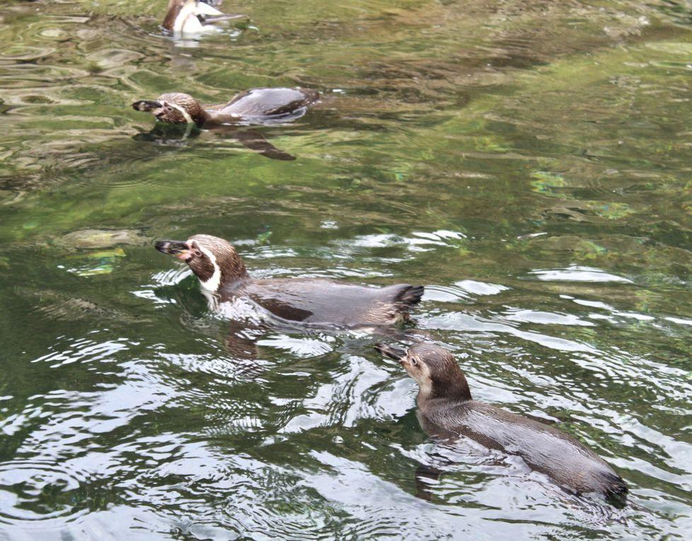 À la découverte du Bioparc de Doué la Fontaine