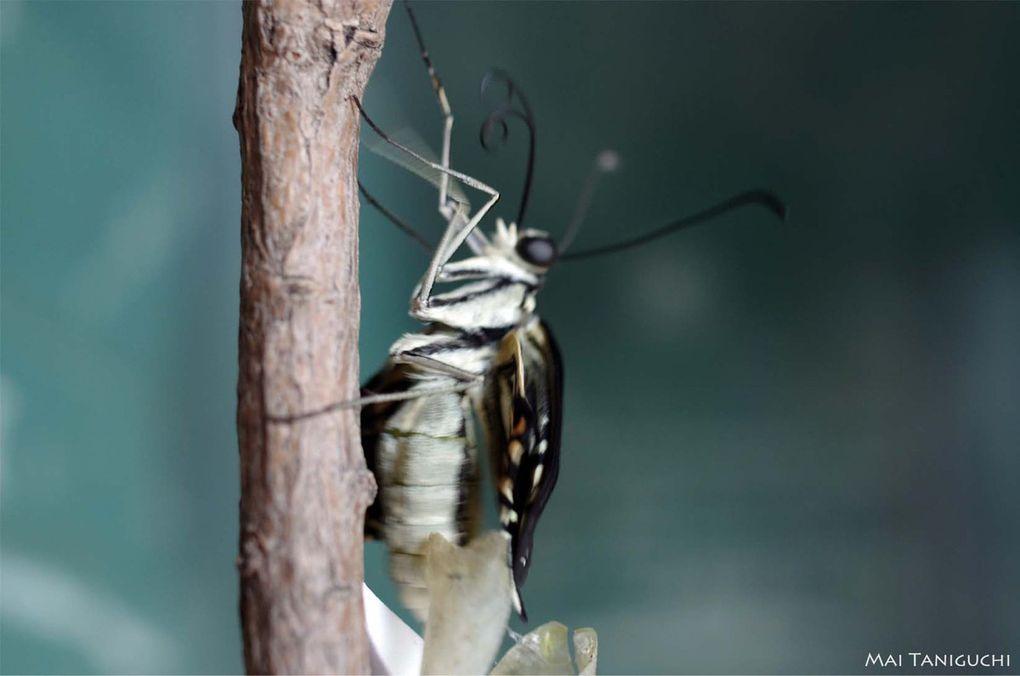 Le 2e et le 3e papillons