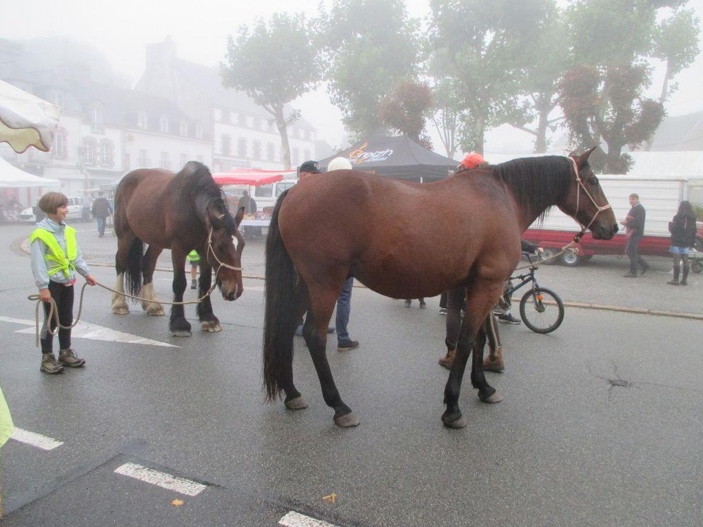 La fête du cheval au Faouet