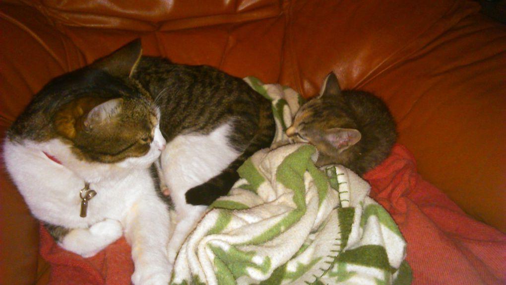 La cohabitation entre animaux