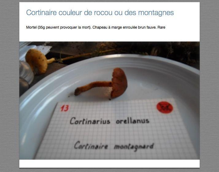 Cortinaires, Entolomes, Galères, Hébélome et Pholiotes