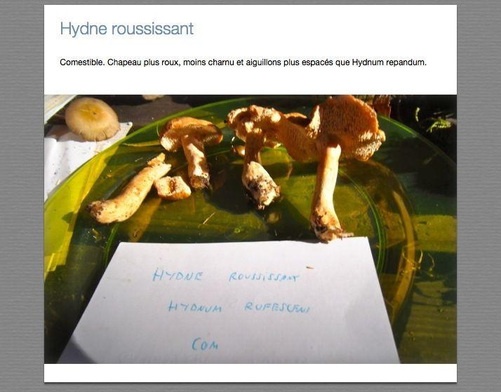 Hydnes