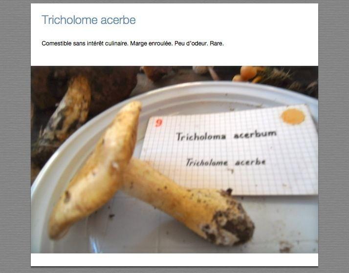 Tricholomes