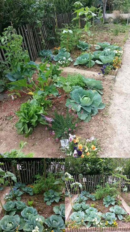 Eté 2014 - Photos du jardin partagé Anna Marly (Paris 14ème) prises par MFL