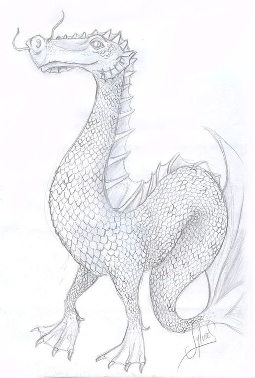 Croquis de dragons