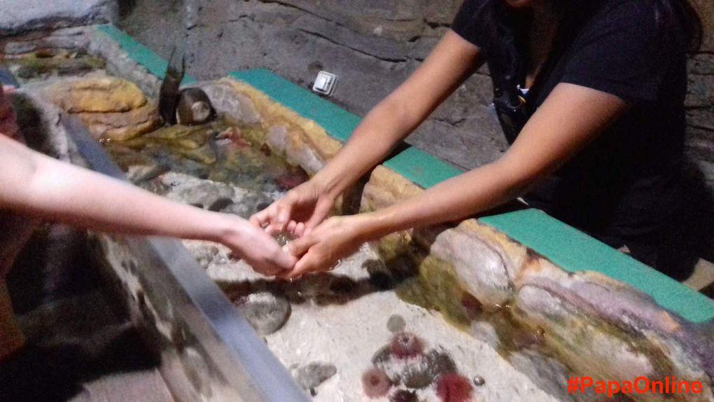 [Sortir] Sea Life : l'aquarium préféré des #EnfantsOnline !