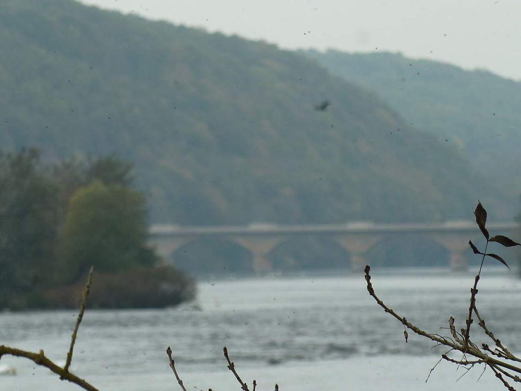 Paysage de la rivière Dordogne au large du village de Pontours en amont de Lalinde. Zones de bélisses. (Photos B.S.)