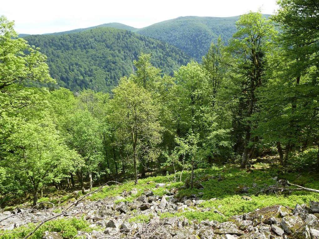 """Du col de Bramont : en route vers la """" Vieille Montagne """" (Altenberg) ..."""