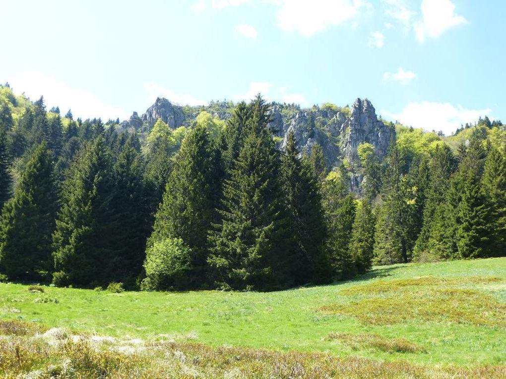 Hautes-Vosges : MISSHEIMLE (alt. 1110 m) - 13 - .