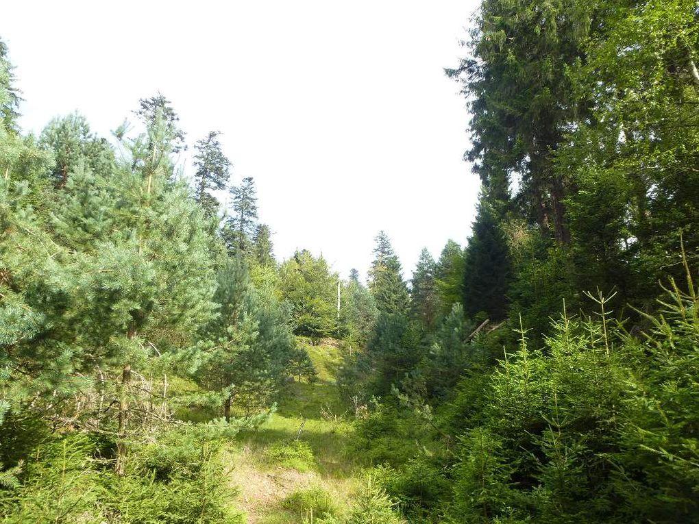 Schneeberg, Wangenbourg (France, Vosges Centrales). Date : août 2014.
