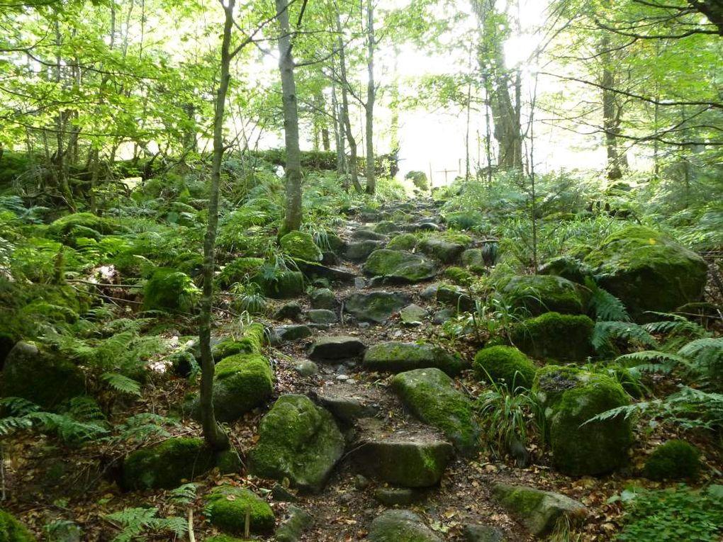 Diaporama 1 : la montée au Frankenthal, via le vallon solitaire du Rothried.
