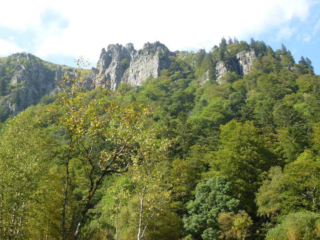 Diaporama : vues naturalistes sur la tourbière humide du Falimont.