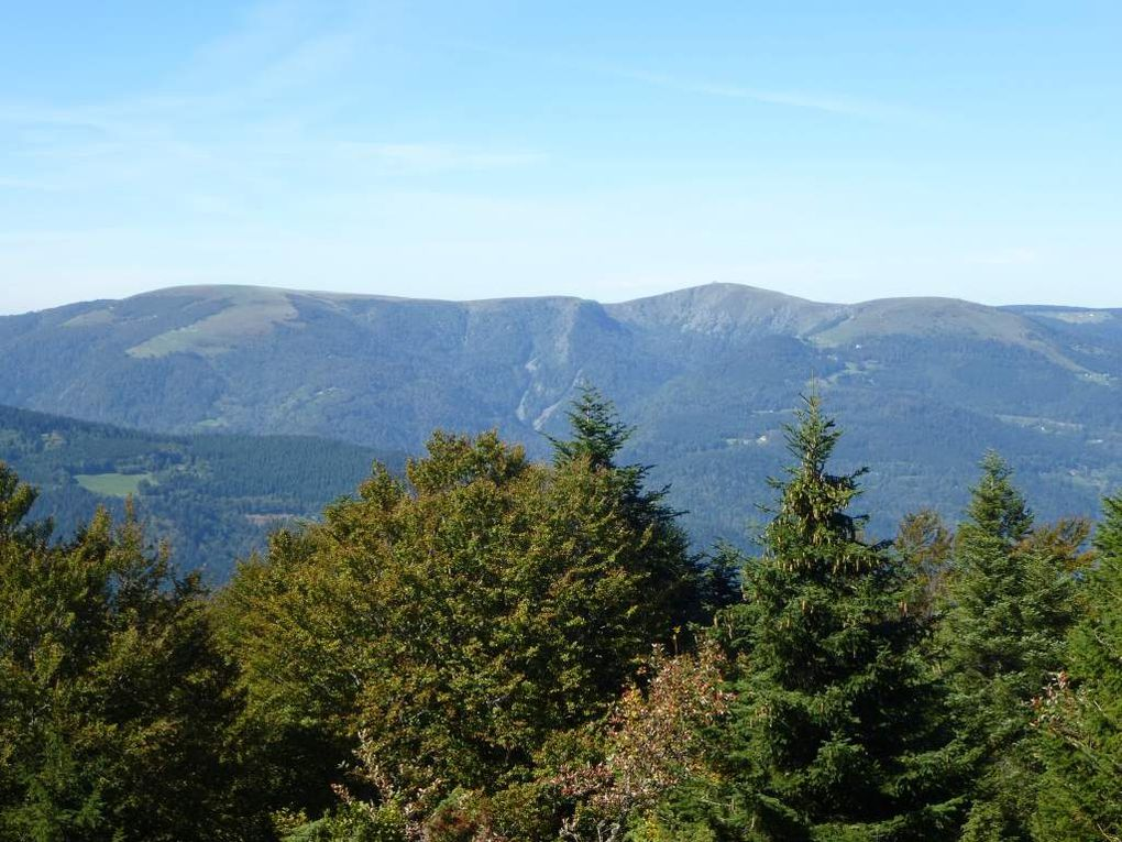 Diaporama : genévriers sauvages et vues sur la grande crête vosgienne (massif du Hohneck).