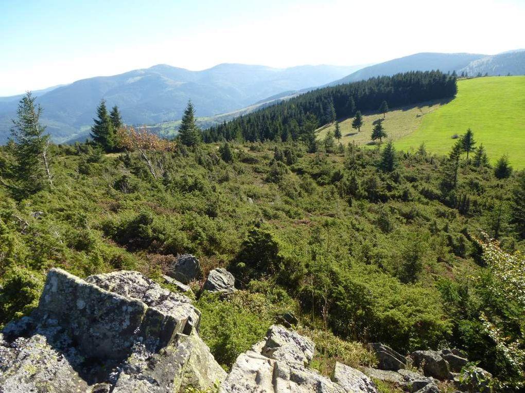 Diaporama : la chaume sommitale du Steinmauer, un site naturel grandiose !