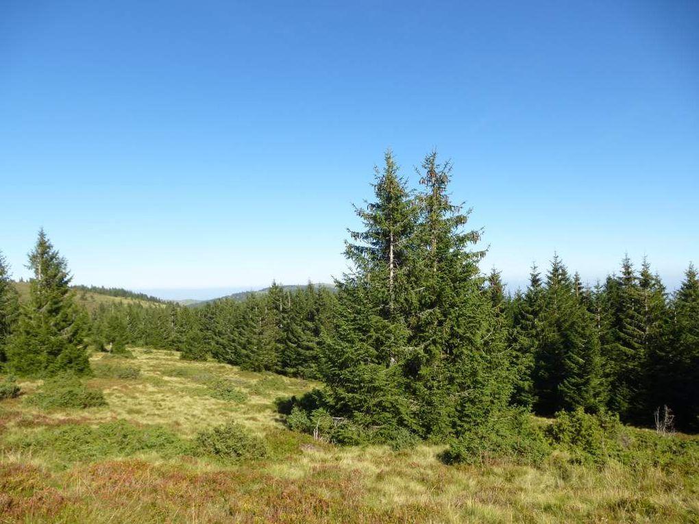 Diaporama : la chaume sommitale dénudée du Langenfeldkopf.