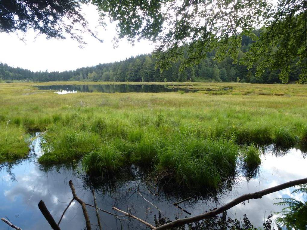 Diaporama : le radeau tourbeux flottant et Drosera Rotundifolia.