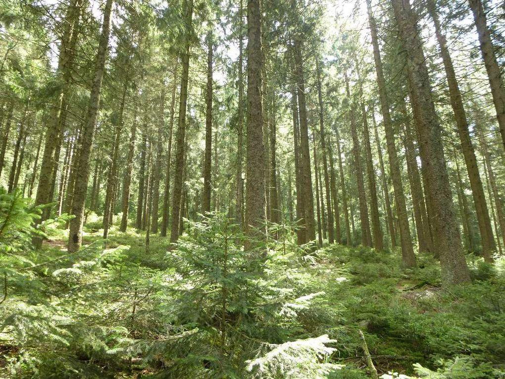 Diaporama : la forêt domaniale (réserve biologique), de l'Urstein ...
