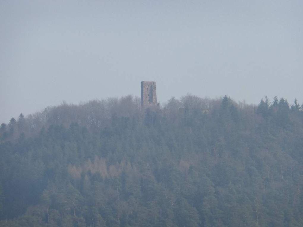 Au sommet du Rappenfels savernois : pinède sur dalle, sièges naturels et beau point de vue !