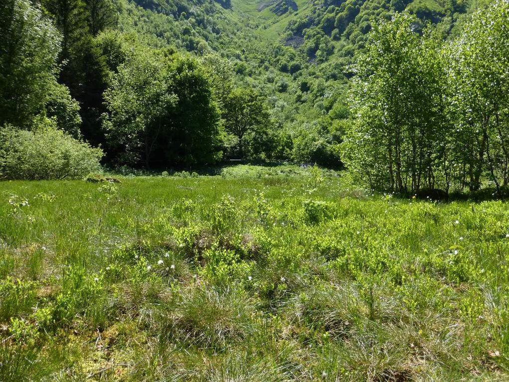 Hautes-Vosges : FRANKENTHAL (alt. 1030 m) - 21 - .