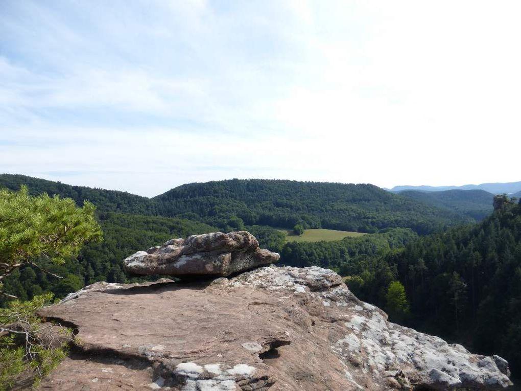 Nonnenfels (348 m) : une pinède sur dalle et un point de vue remarquables !