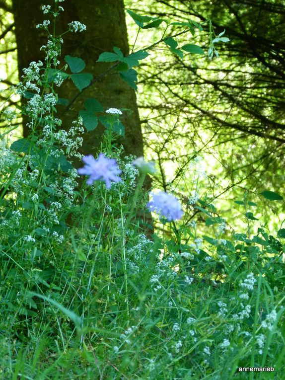 Découverte de la flore et de la faune.*