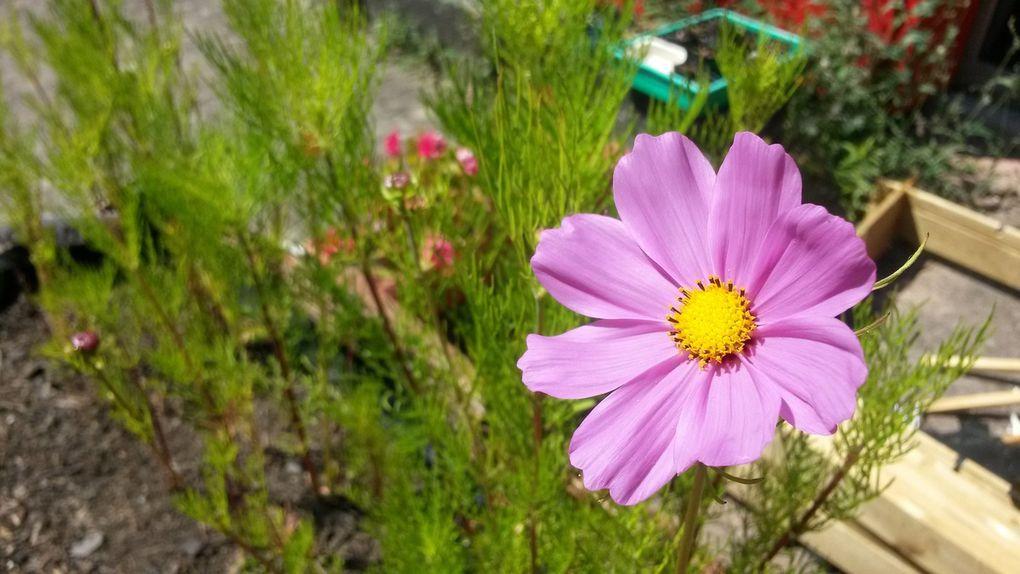 Jardin-potager fin juin 2014