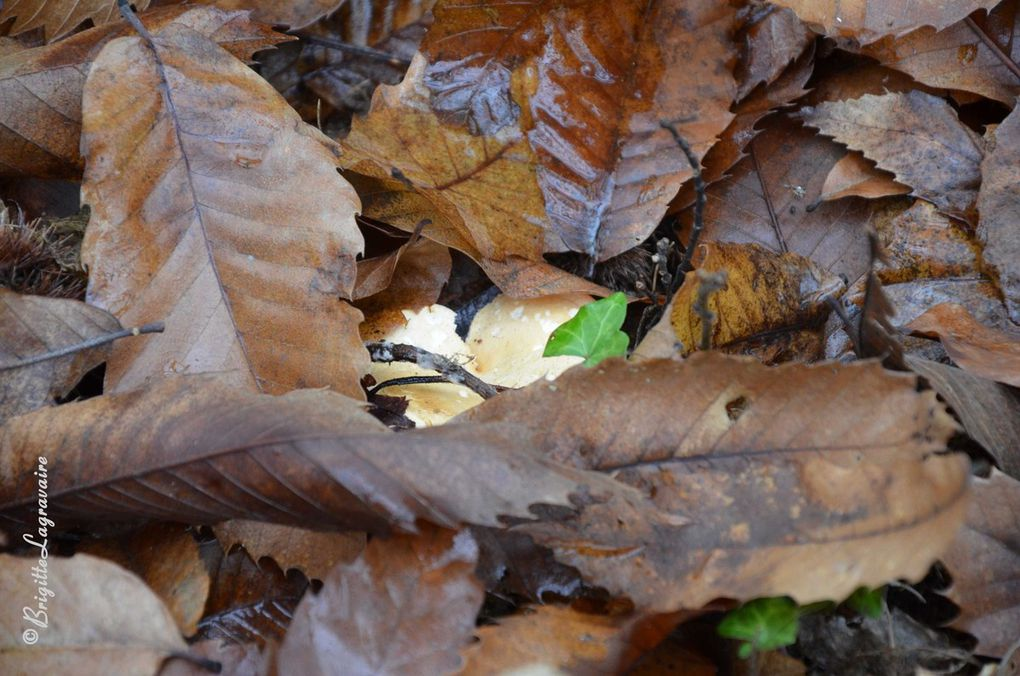 Un petit tour dans les bois (1)