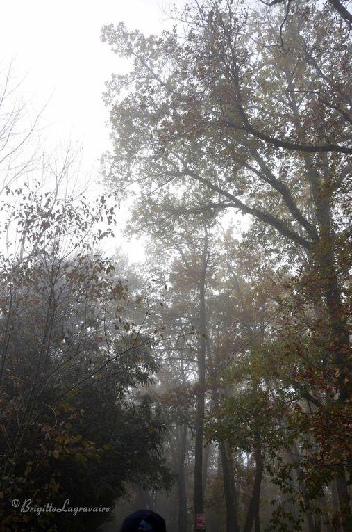 Et c'est parti... pour ces belles surprises que nous a réservées la rivalité entre le soleil et le brouillard.