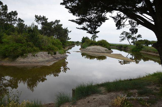 Un après-midi de printemps au Bassin d'Arcachon