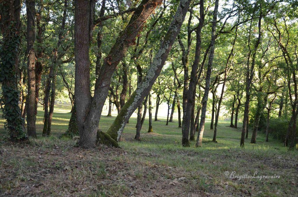 Le petit lac et le bois de l'aire de pique-nique de la Tour des Templiers.