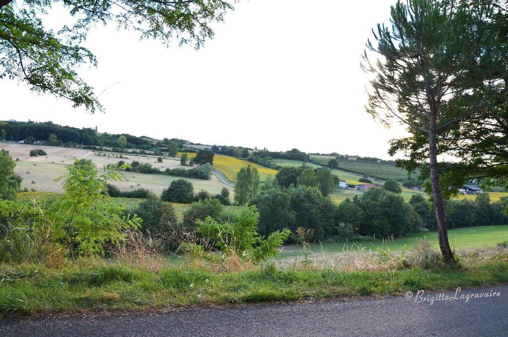 Les paysages agricoles.