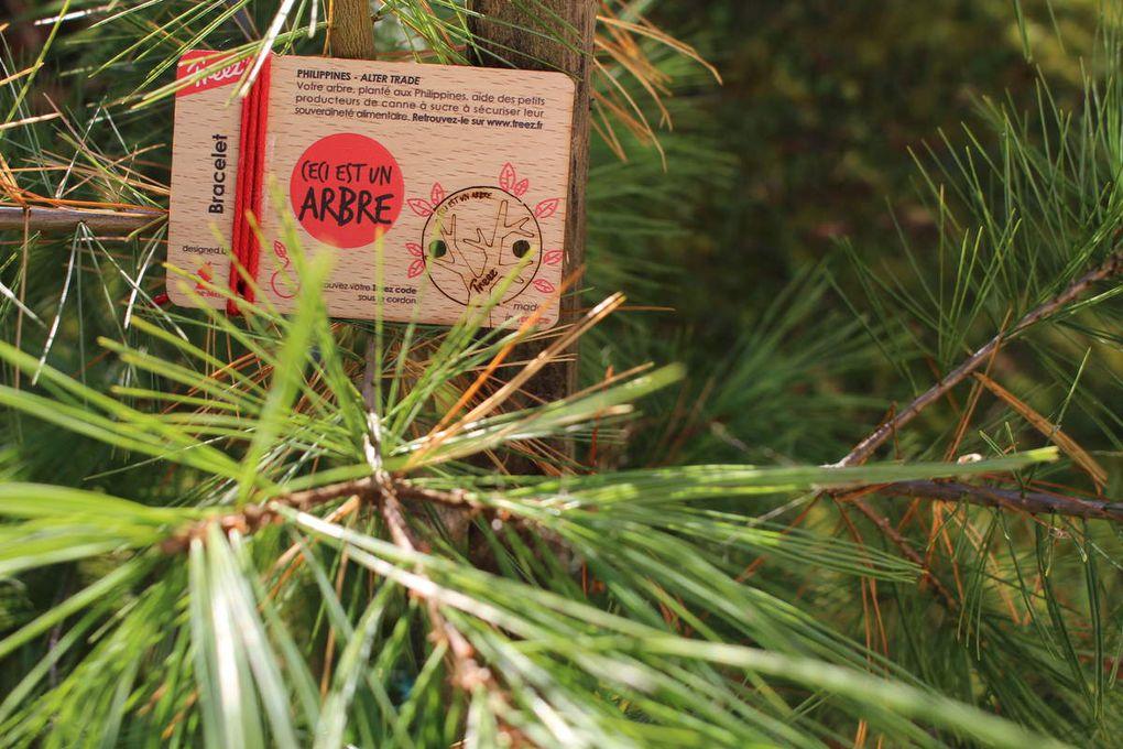 Treez : le cadeau aussi beau qu'écolo