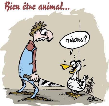 animaux écolos et végés
