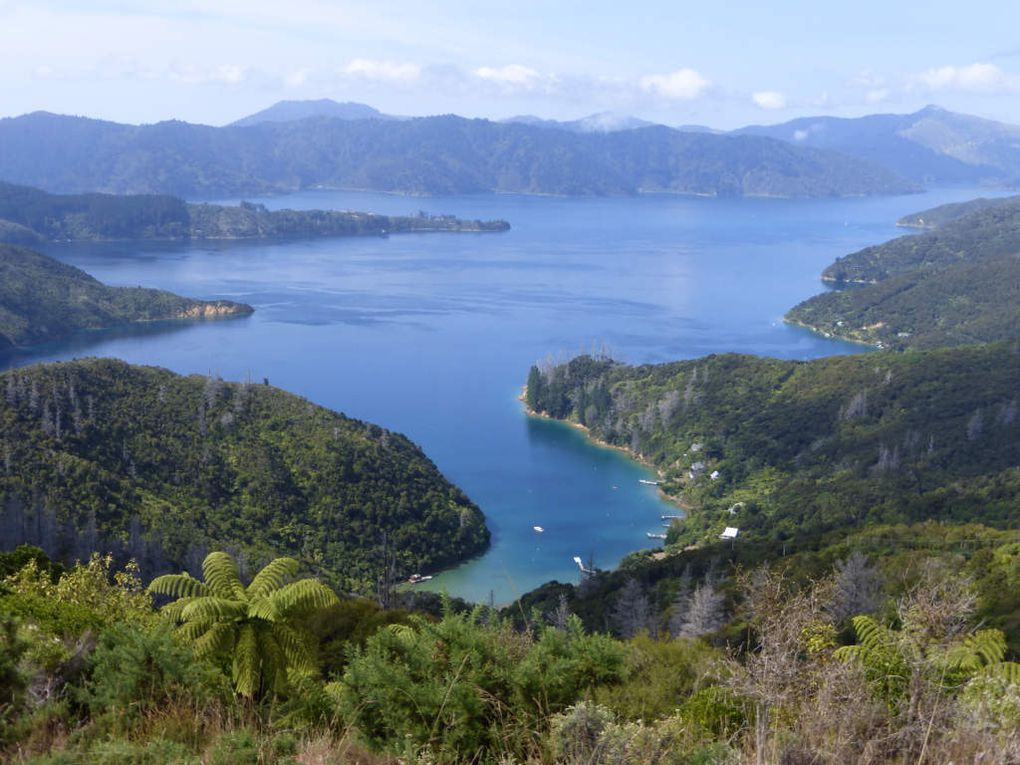Queen Charlotte Track au cœur des Malborough Sounds.