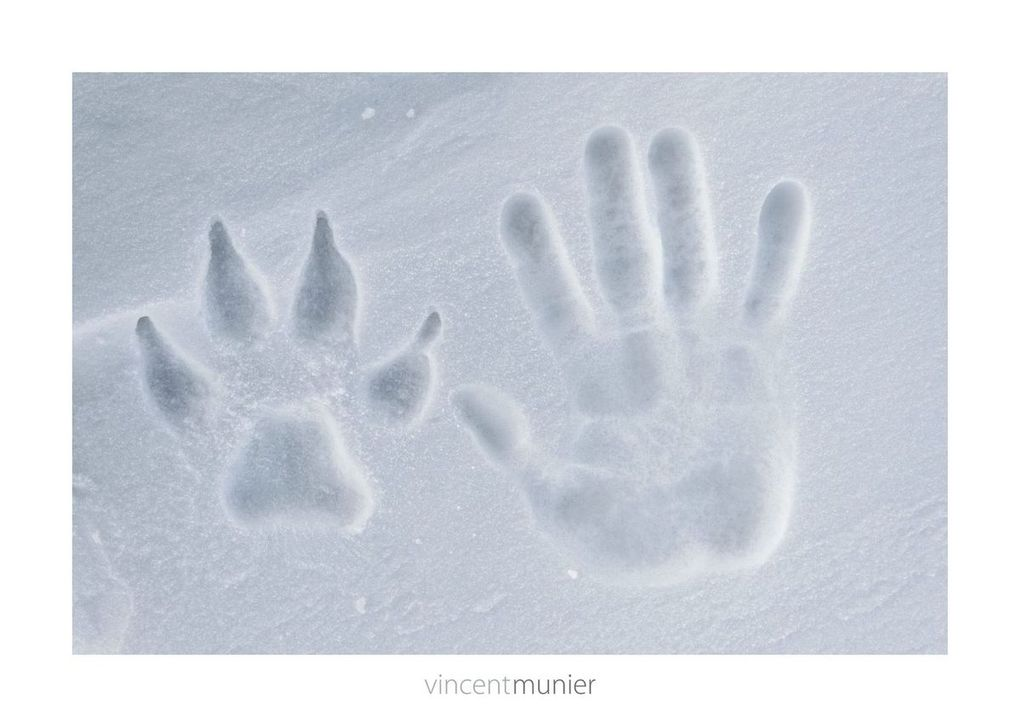 "Quelques photos tirées du livre (source: page facebook ""Vincent Munier-  Photographer"")"