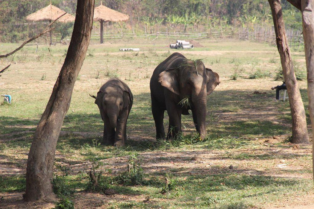Ma journée avec des éléphants