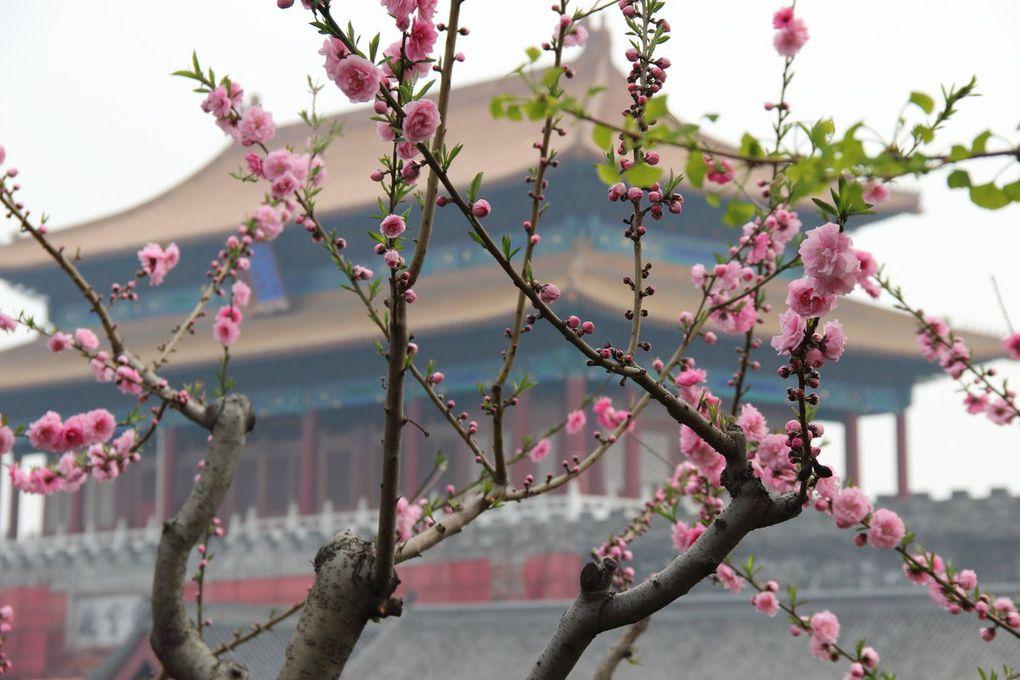 Beijing : 700 millions de chinois et moi et moi et moi...