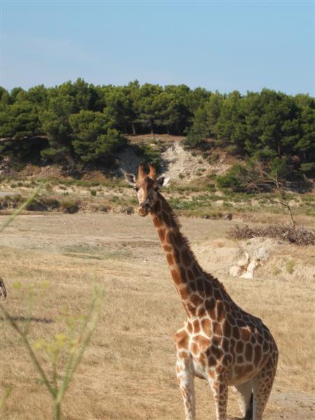 30 juillet « Safari »