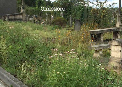 À Notre-Dame-de-Bondeville, été sec et herbes folles …