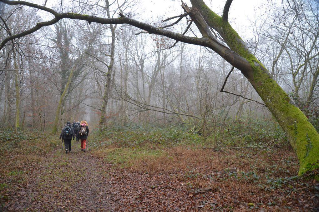 Sortie 1/2 journée dimanche 18 décembre 2016 à Recloses et en forêt de Fontainebleau